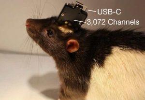 интерфейс на крысе